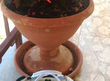 Set per giardinaggio Pathonor